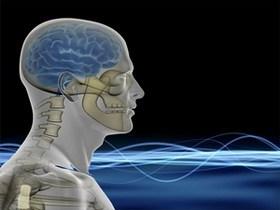 მეცნიერებმა აღმოაჩინეს  ტვინის ნაწილი, რომელიც პასუხს აგებს  გამბედაობაზე
